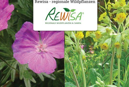 Rewisa regionale Wildpflanzen
