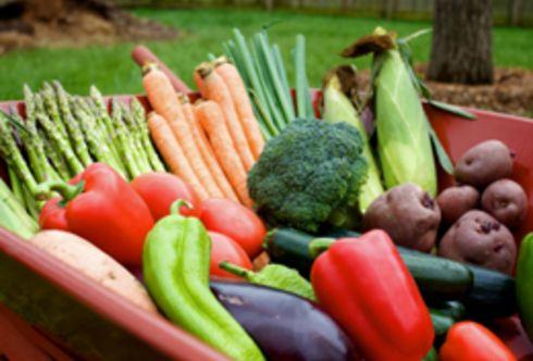 Erntezeit – im Gemüse- und Beerengarten!