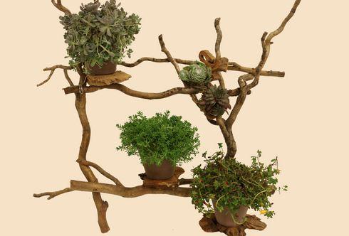 Ein Bild von einer Pflanze