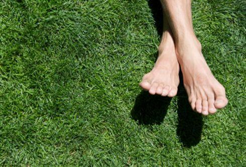 Es grünt so grün: der perfekte Rasen