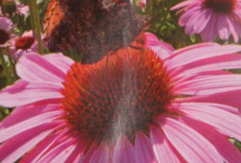 Die Sommerblumenaussaat – in drei Schritten zur Blüte