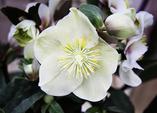 Blütenzauber mitten im Winter