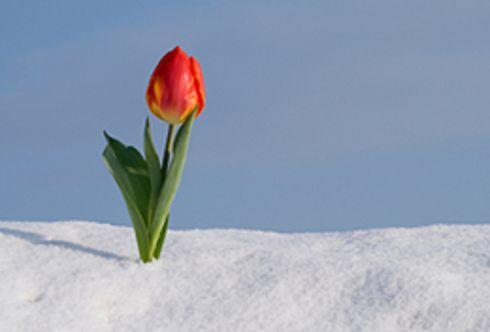 Neuerlicher Wintereinbruch?! - biologische Tipps