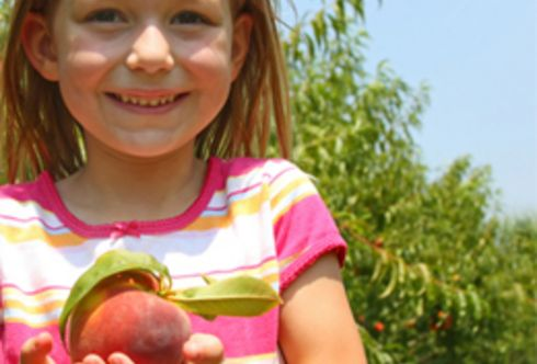 Gesunde Pfirsiche - Kräuselkrankheit vorbeugen!