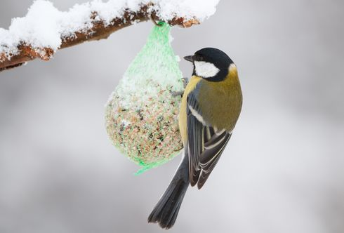 Winterspaß Vogelfütterung: Gefiederte Gäste lieben die Vielfalt