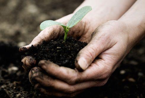 Gesundes Gemüse - Schritt 5: Bio-Düngung