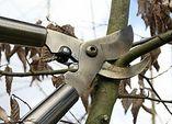 Rückschnitt: Obstbaumschnitt - die Technik