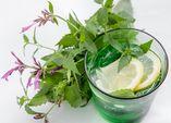 Limonade mit Limonadenpflanze