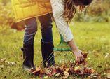 Herbstlaub als Kompost nutzen