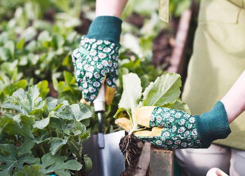 Gartengenie ohne Chemie in Graz Webling