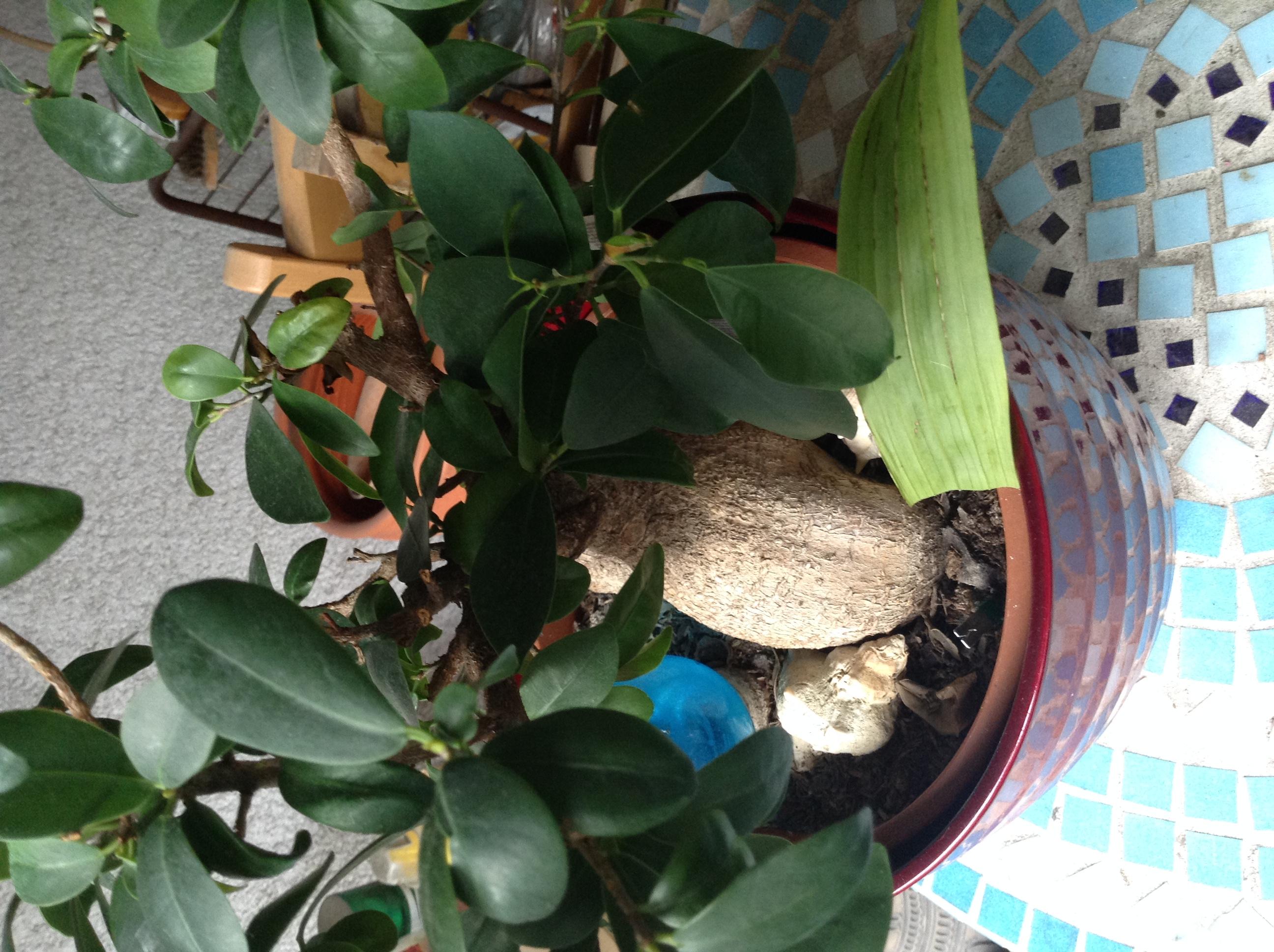 Alle fragen bellaflora for Kleine fliegen im topf