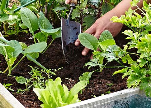 Erde für Garten & Hochbeet